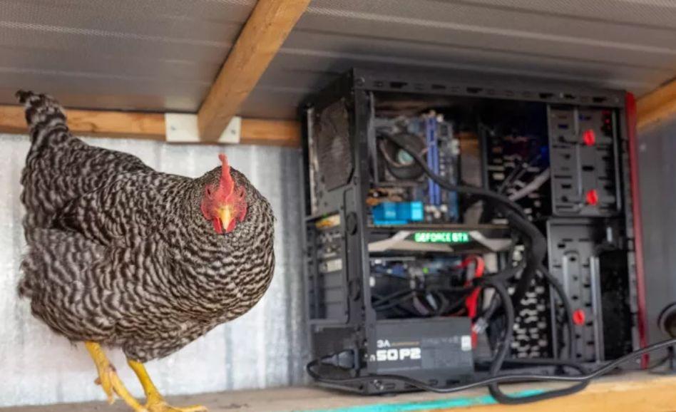 Mining chickens
