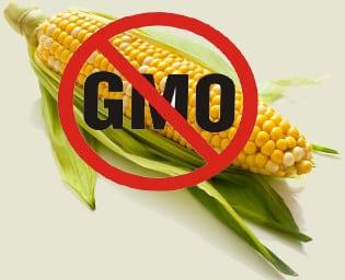 maiz no modificado genéticamente