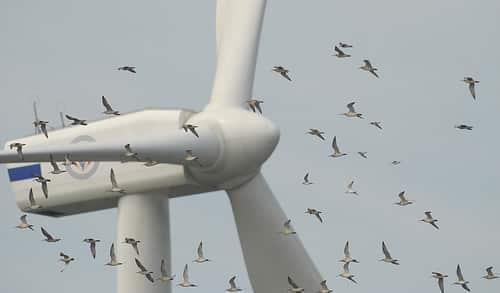 pájaros alrededor de un generador eólico