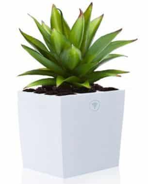 planta genera electricidad